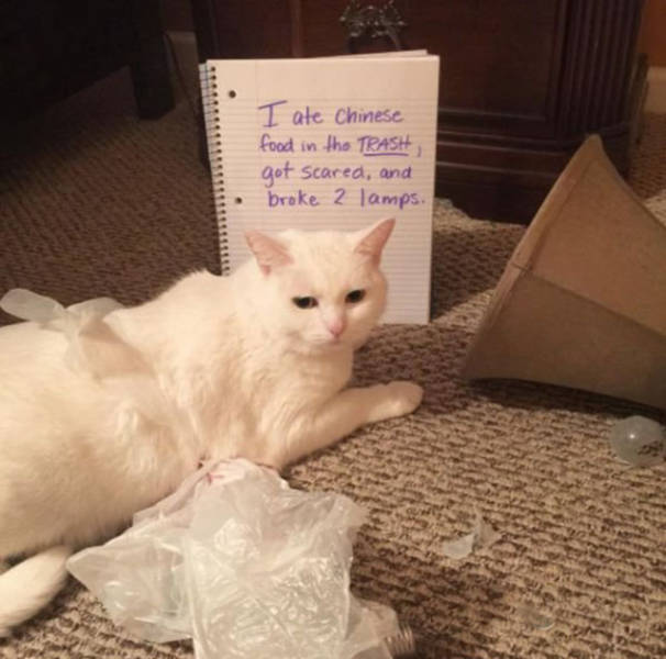If Only Humans Could Appreciate What Their Cat Masters Do For Them (23 pics)