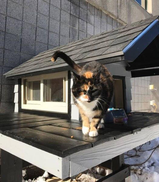 This Cat Has A Better Apartment Than Most People (7 pics)