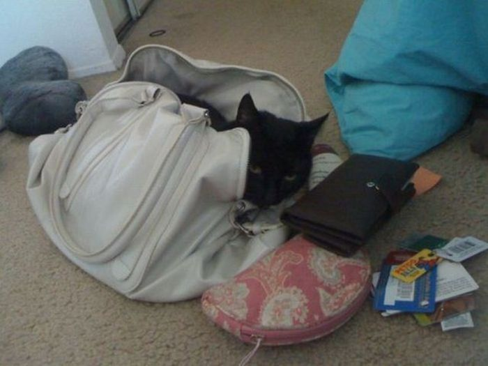 Cats Truly Do Live By Their Own Rules (15 pics)