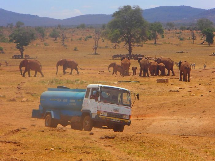 This Man Drives Several Hours Everyday To Bring Water To Thirsty Wild Animals (9 pics)