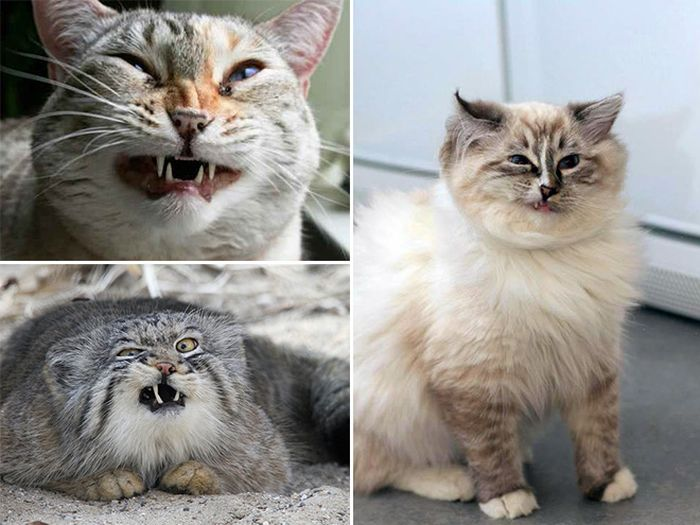 Cats Look Hilarious Right Before They Sneeze (16 pics)