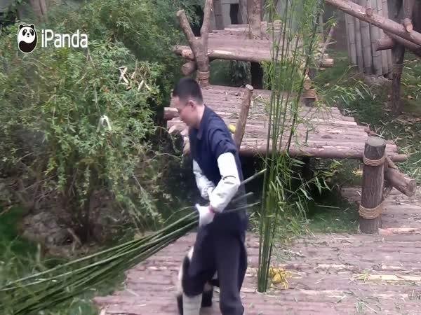 Panda Wants To Play