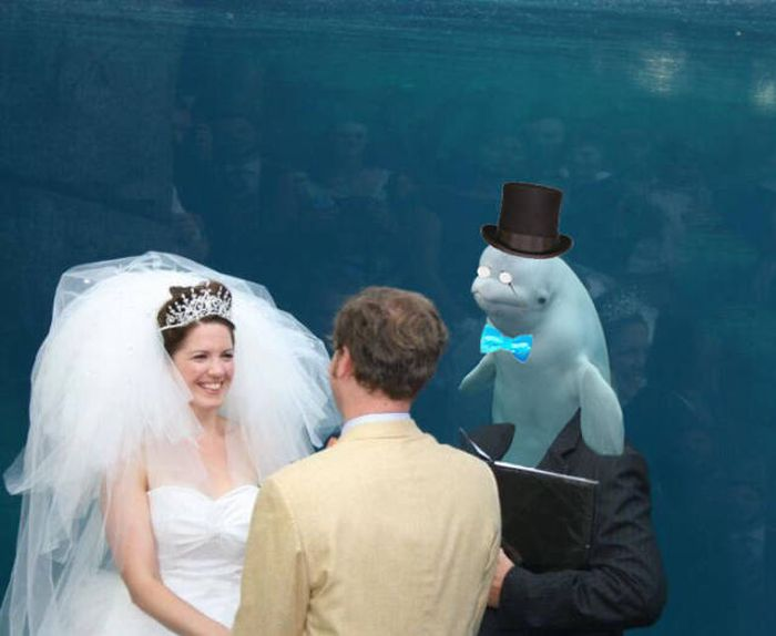 Beluga Whale Attends Wedding, Sparks Photoshop Battle (40 pics)