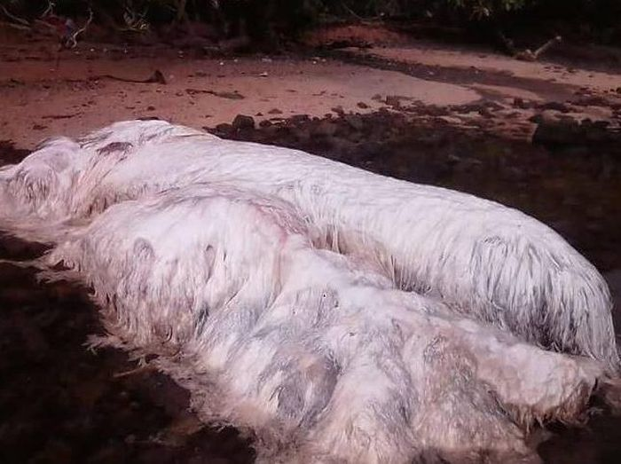 Mysterious Hairy Monster Washes Up On Beach In The Philippines (4 pics)