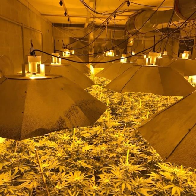 Authorities Find Massive Cannabis Farm In A Nuclear Bunker (3 pics)