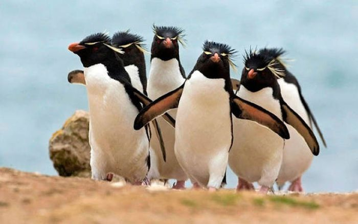 Animals Who Look Like They Belong On Album Covers (30 pics)