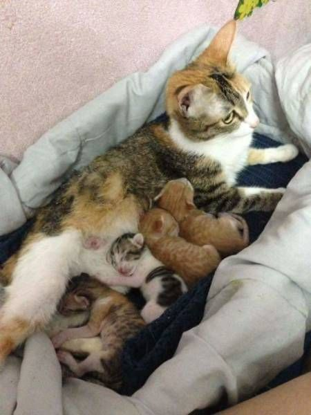 Proof That Cats Are Loving Parents (10 pics)