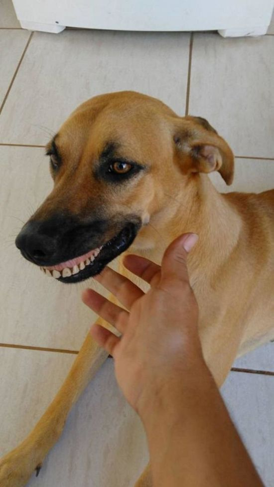 Owner Cracks Up After Realizing How His Dog Got Her New Smile (4 pics)