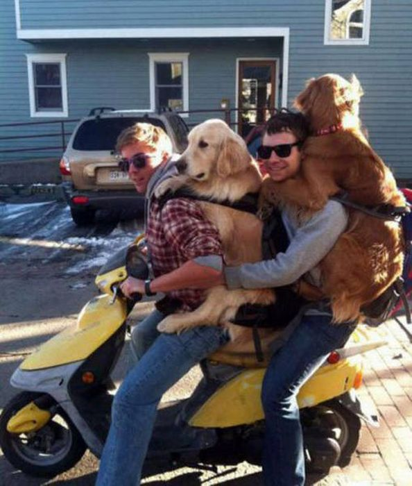 These Animals Think Their Human Is An Idiot (53 pics)