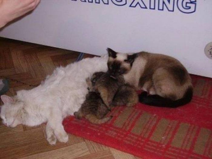 Farmer Thought She Picked Up Kittens But She Was Wrong (7 pics)