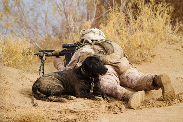 Powerful Photos Show The World's Most Loyal Service Dogs (35 pics)
