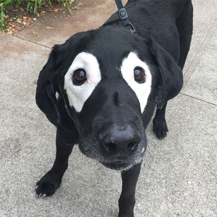 Unusual But Adorable Looking Animals With Vitiligo (15 pics)