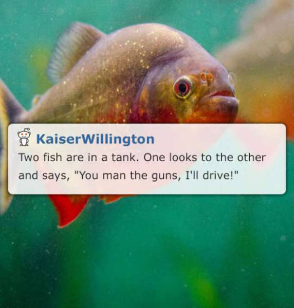 Lame Puns And Jokes That Are So Bad They're Good (16 pics)