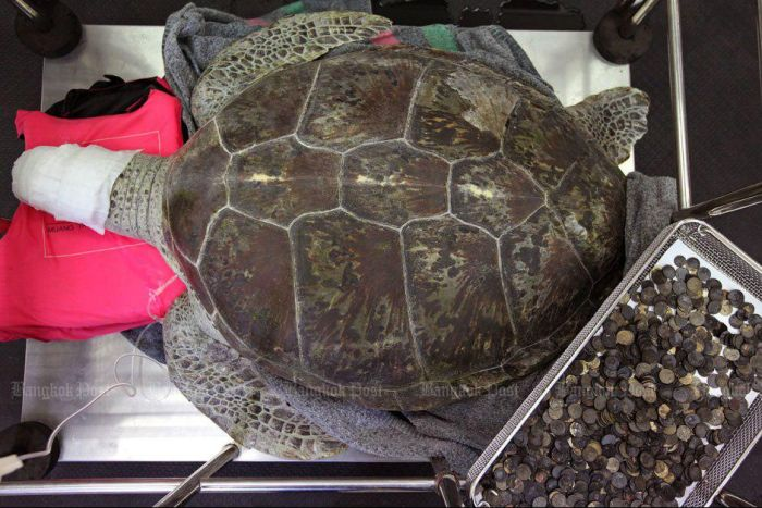 Veterinarians Remove 915 Coins From 25 Year Old Tortoise (8 pics)