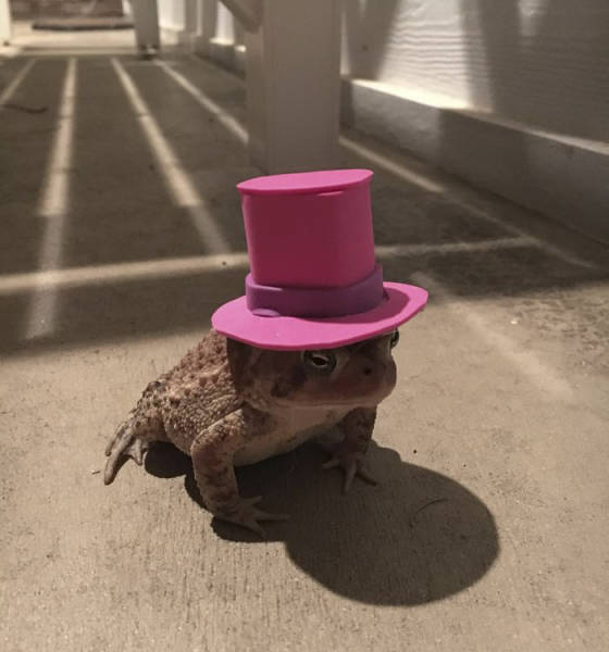 Toad Fashion Is Now A Very Real Thing (7 pics)
