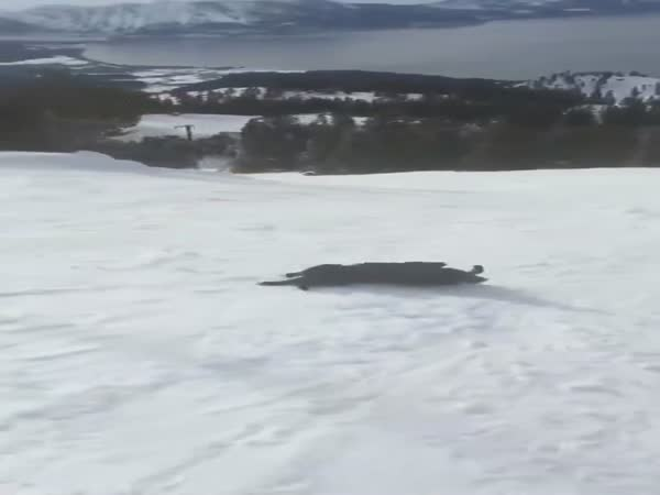 The Dog Is Riding The Mountain
