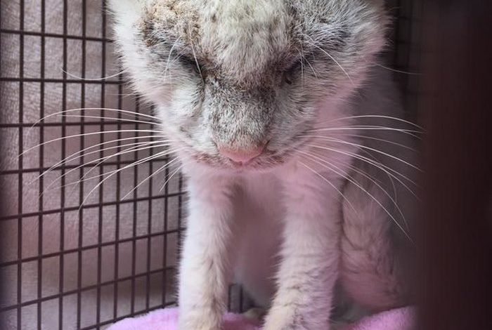 Rescued Cat Reveals The Incredible Beauty Of His Eyes (8 pics)