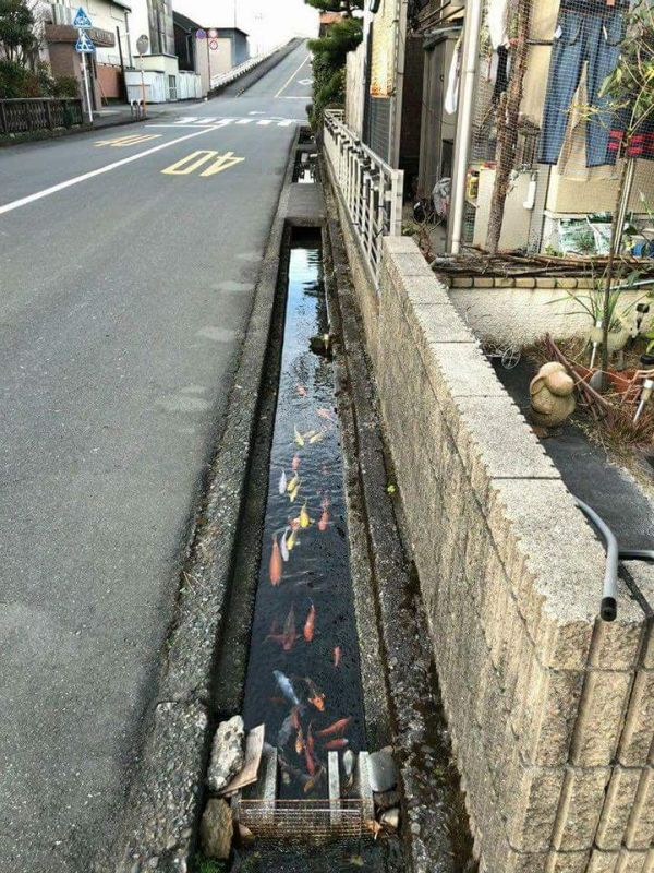 This Japanese Drainage Canal Is Clean Enough To Have Koi In It (9 pics)