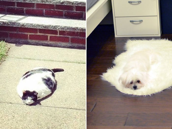 Animals That Appear To Be Melting (17 pics)