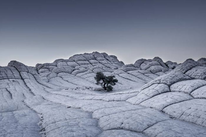 Stunning Photos From The Sony World Photography Awards (50 pics)