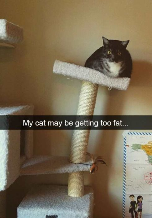 Cats Are Even More Hilarious On Snapchat (33 pics)