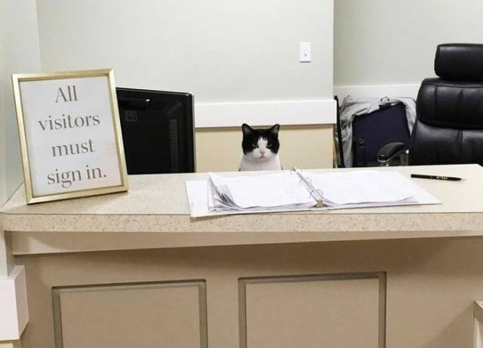 Oreo Is The World's First Cat Nurse (6 pics)