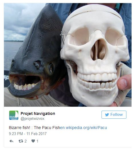Pictures Of Animal Mouths That Are Absolutely Terrifying (18 pics)
