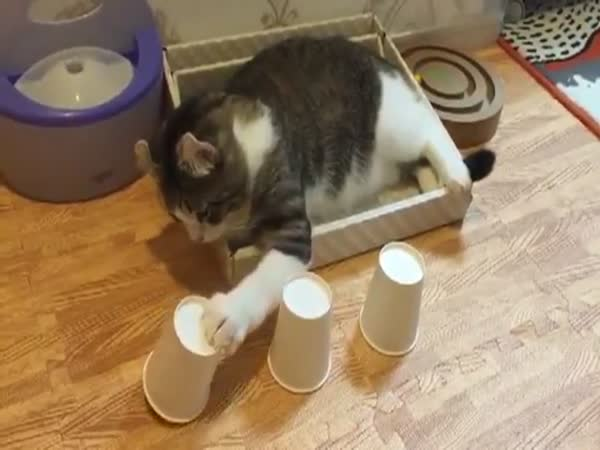 No One Can Hustle This Cat