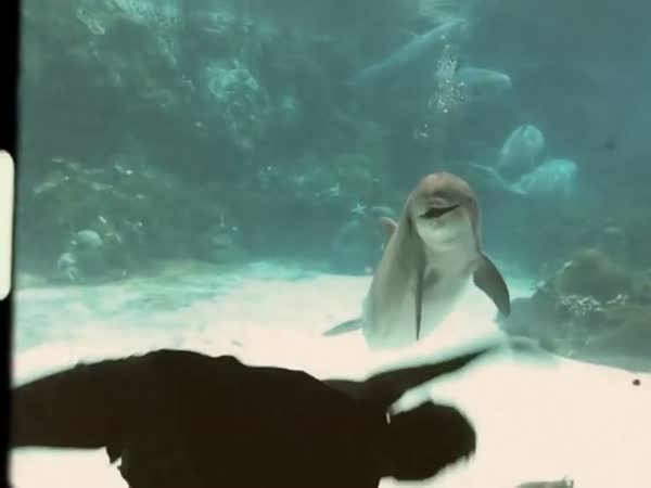 Girl Arranged A Performance For The Dolphin