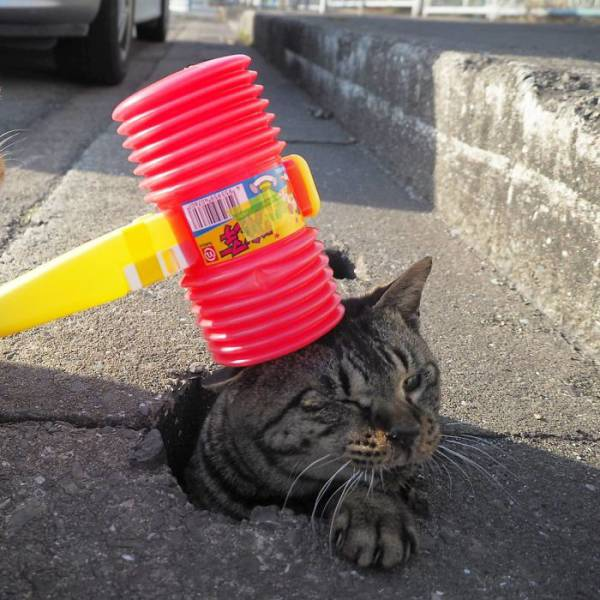 Stray Cats Seem To Love These Drain Pipe Holes (7 pics)