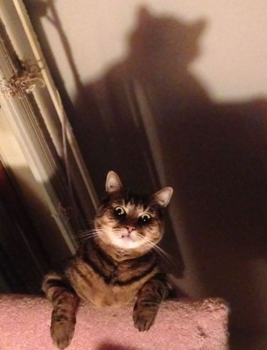 Proof That Cats Truly Are Demons (38 pics)