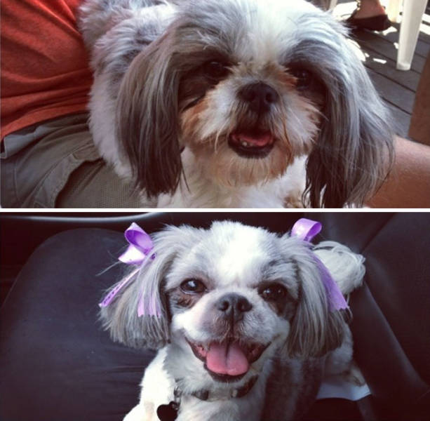 Proof That Every Dog Needs A Cute Haircut (50 pics)