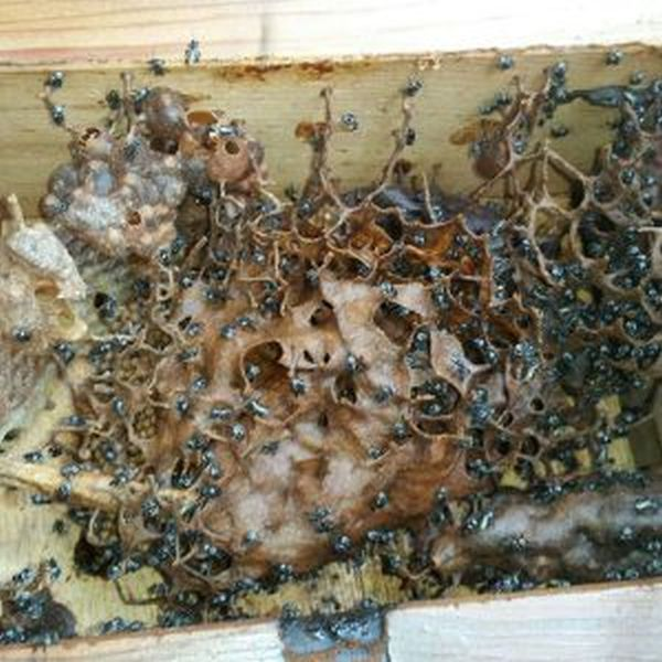 This Family Found Some Horrifying Things Growing On Their House (4 pics)