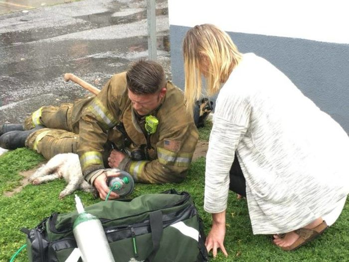 A Hero Stepped Up To Save This Woman's Dog When She Thought It Died (5 pics)
