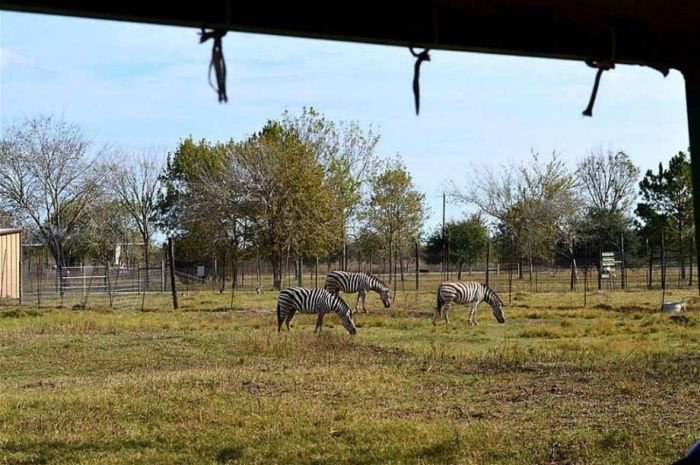 Texas Zoo For Sale In The Houston Area For $7 Million (21 pics)
