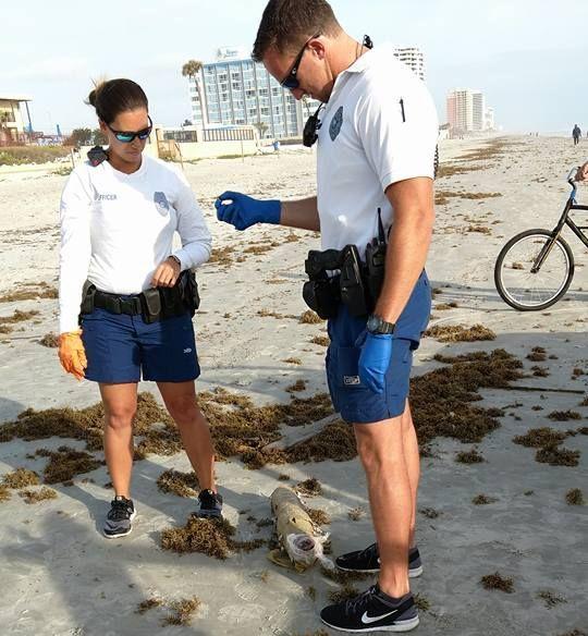 Daytona Resident Finds Drug Stash On The Bech (4 pics)
