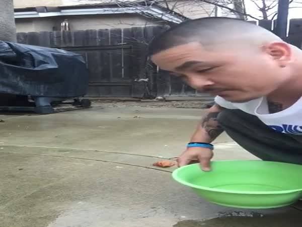 Ruthless Dad Tricks His Son Into Picking Up A Fresh Turd