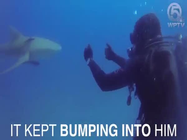 Diver Pulls Huge Rusty Hook Out Of Female Lemon Shark