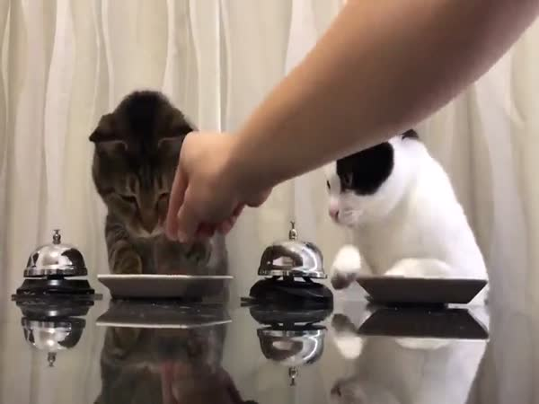 Cats Ask For Food