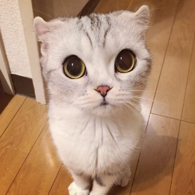 This Japanese Kitty Is Taking Instagram By Storm (15 pics)