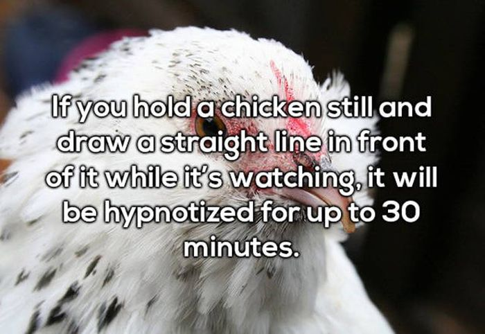 Facts Are Not Facts If They Don't Make You Say WTF (20 pics)