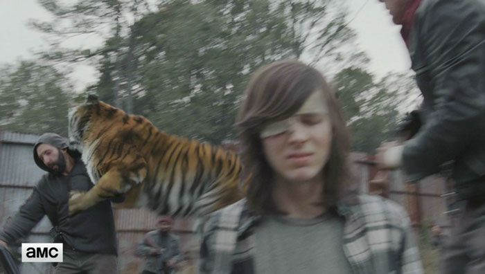 You'll Never Look At The Tiger From The Walking Dead The Same Way (9 pics)