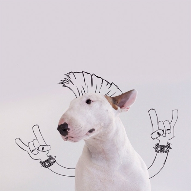 Pets Become Way Cooler When You Add Doodles (20 pics)