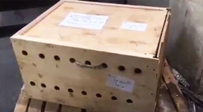 Mysterious Box At The Airport Finally Opened After 7 Days (6 pics)
