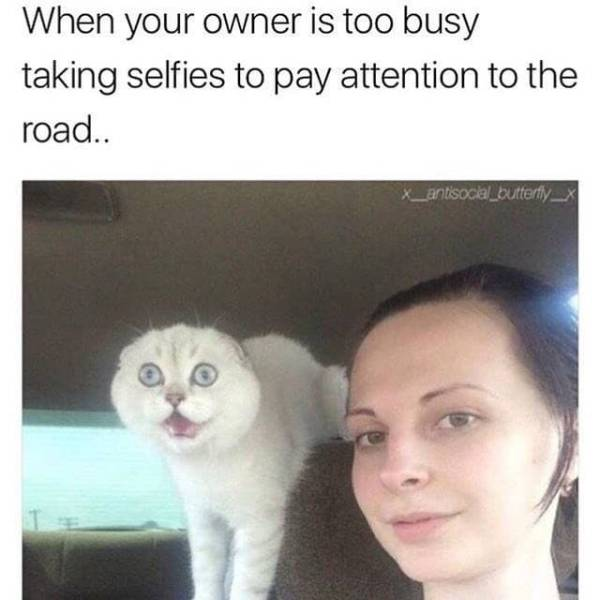 Memes You'll Only Understand If Cats Rule Your World (32 pics)