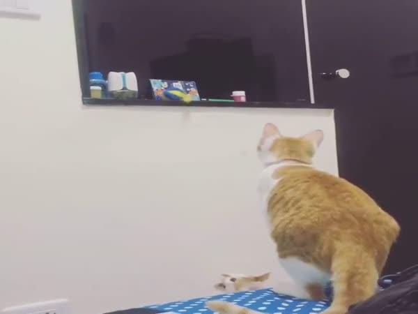 Cat Helped The Kitten