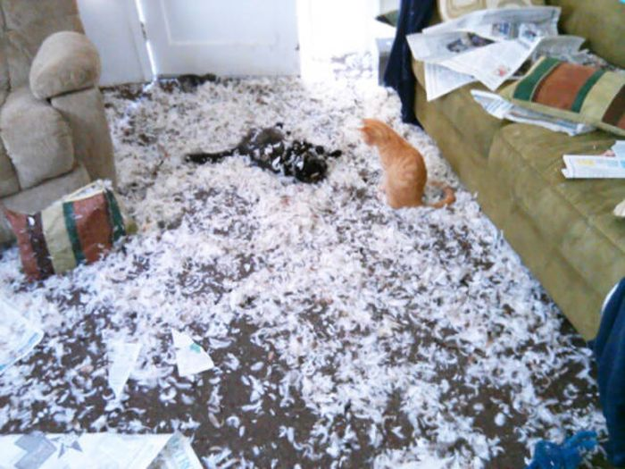 If You Give Your Pets The Chance They Will Destroy Your House (43 pics)
