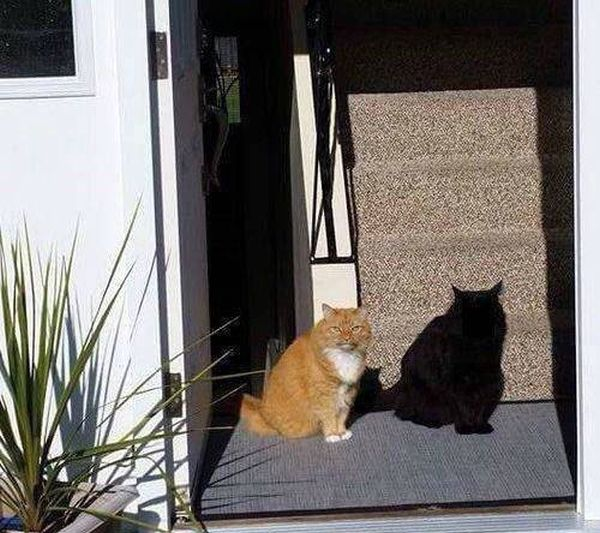 Can't Tell If This Is A Cat Or A Shadow (2 pics)