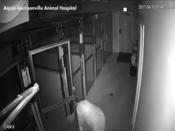Escape From The Animal Hospital