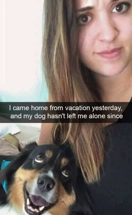 Dogs Are Like Celebrities On Snapchat (50 pics)